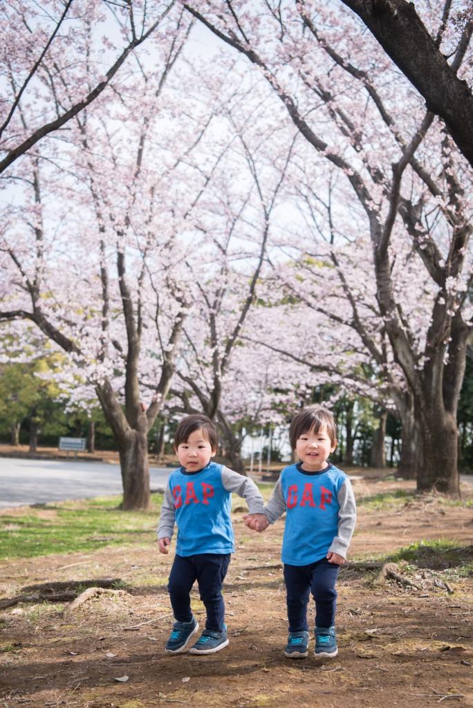 横浜の出張撮影 桜バックの家族写真